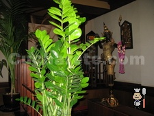 Thai Gardens - © Cucharete.com